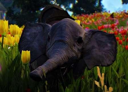 BDO Trading Elephant