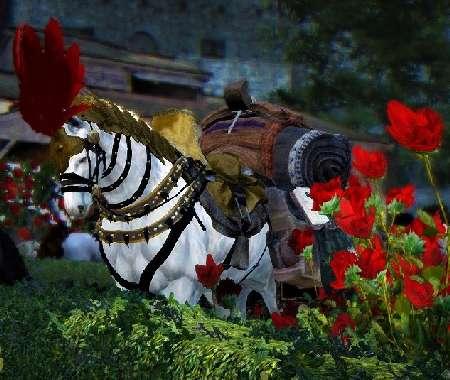 BDO Trading with a horse
