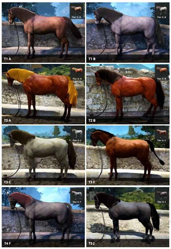 BDO Wild Horse Coats