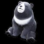 Pearl Bear Pet