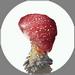 Red Skirt Poison Mushroom
