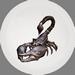 Toxic Desert Scorpion