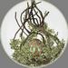 Treant Crystal Tree