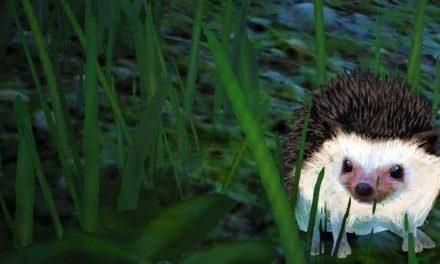 BDO Hedgehog Guide: Gathering Pet (Black Desert Online 2019)
