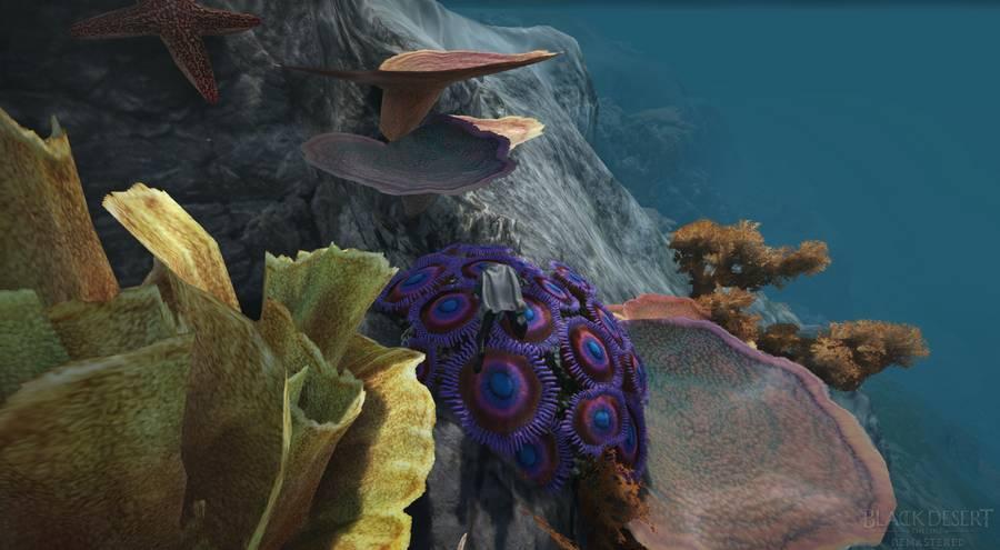 BDO Swimming & Underwater Gathering: Maps, Items, Gear