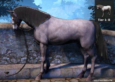 BDO Horse Tier 1-B