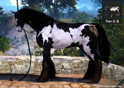 BDO Horse Tier 3-A