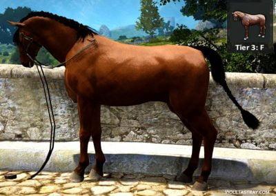 BDO Horse Tier 3-F