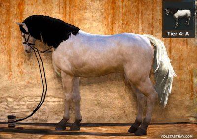 BDO Horse Tier 4-A