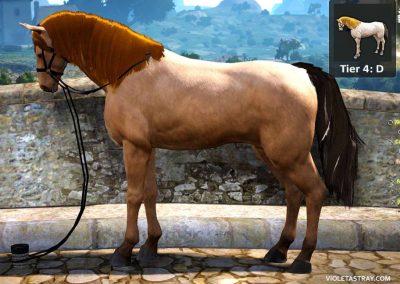 BDO Horse Tier 4-D