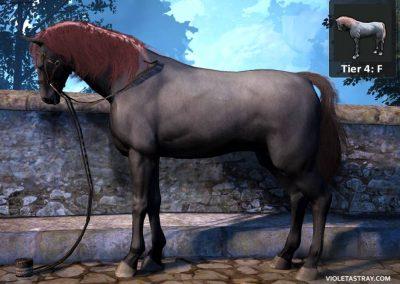 BDO Horse Tier 4-F