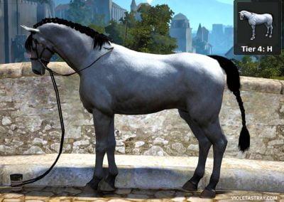 BDO Horse Tier 4-H