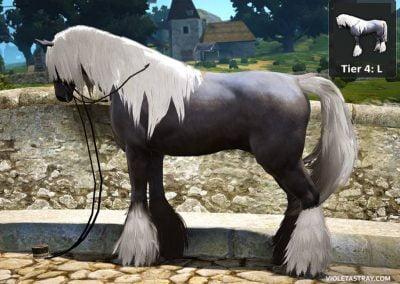 BDO Horse Tier 4-L