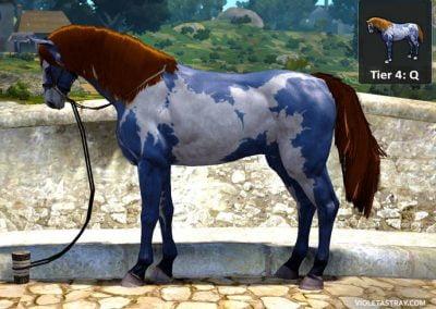BDO Horse Tier 4-Q