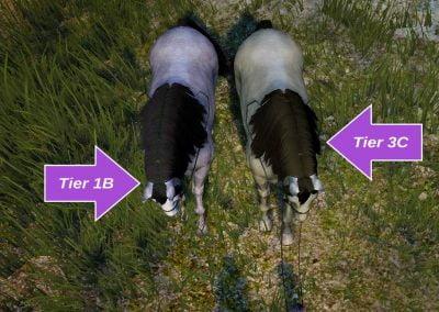 T1B vs T3C (top)