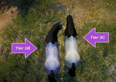 T1B vs T3C (top back)
