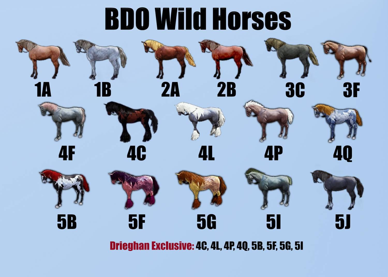Wild Horse Coats for Horse Breeding